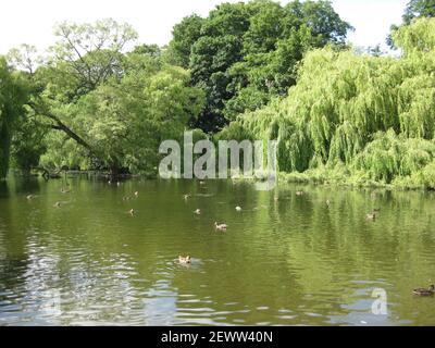 Thwaite Hall Gardens lake views in Cottingham, East Yorkshire