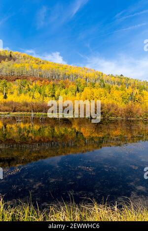 Scenic autumn landscape with Aspen trees reflecting in a mountain lake near Ridgway, Colorado.