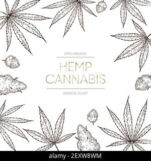 Cannabis sketch background. Medical marijuana leaves and seeds concept for cbd oil banner. Hand drawn ganja vector poster. Illustration cannabis poster, natural weed for medicine