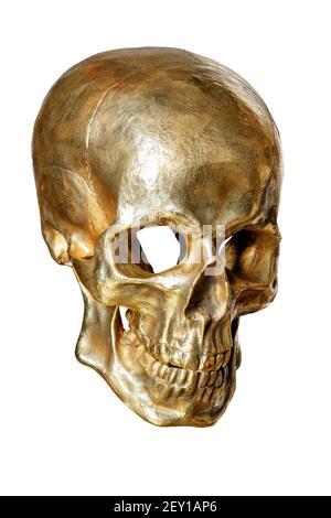 The skeleton of a human skull is painted with gold paint, isolated on a white background, close-up.