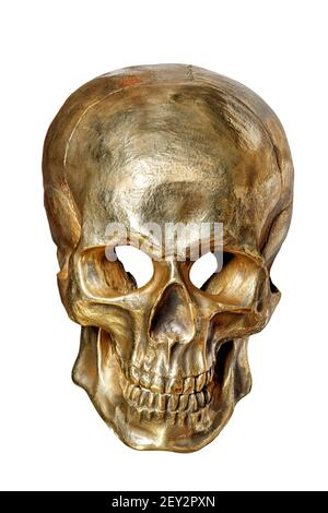 The skeleton of a human skull is painted with gold paint, front view, on a white background close-up.