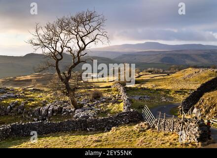 A Winter afternoon at Winskill Stones, Langcliffe, Yorkshire Dales National Park, UK. Ingleborough peak is seen on the horizon.