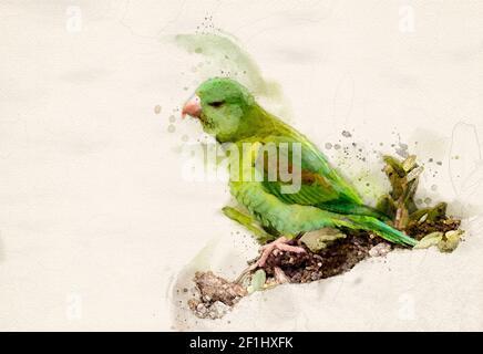 Orange-chinned parakeet digital watercolor illustration