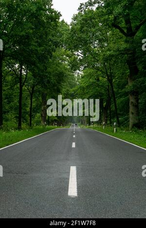 Empty blacktop two-lane road in deep lush green forest with copy space