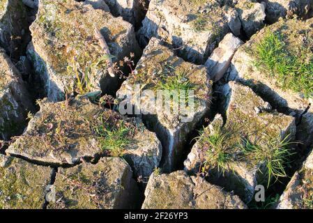 Heavily dried up landscape, mud clumps with deep cracks. Climate change, dehydration, dead vegatation and long-term no rain. Vertrocknete Landschaft.