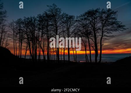 sunset on the sea shore with a view through the silhouettes of trees and beautiful clouds painted in sunset colors in warm tones