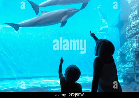 Children watching bottlenose dolphins (Tursiops truncatus) swimming iat Genoa Aquarium, Genoa, Liguria, Italy - Stock Photo