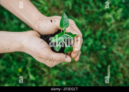 Close up man holding young plant in hands against spring green background. Fresh spring garden concept. Selective focus view from above