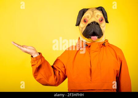 Portrait of pug-headed man holding something by hand. - Stock Photo