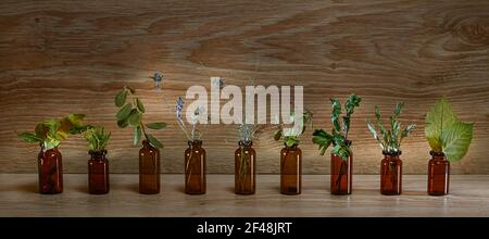 Bottles of dark glass with herbs and dried plants. On a wooden background in a row. Stock Photo
