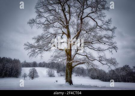 DE - BAVARIA: Wintertime near Bad Toelz