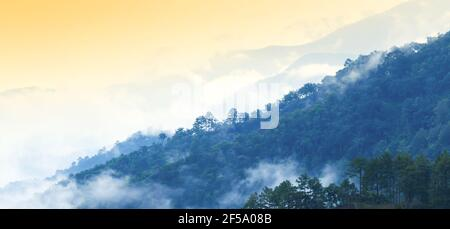 Panoramic scenery early morning views over pine forest, light blue mist covered pine forest and mountain range. Doi Ang Khang, Chiang Mai, Thailand.