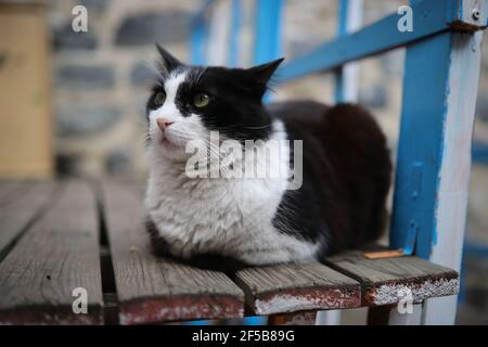 Black and White Cat sitting on a chair