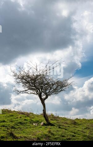 A lonely leafless tree on the top of a mountain with dramatic sky - Stock Photo