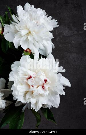 Bouquet of white peony flowers on a dark gray background.