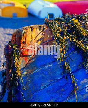 boat hull with seaweed, - Stock Photo