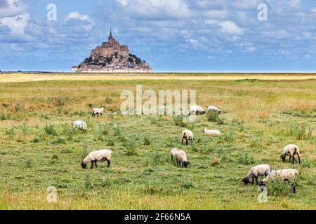 View of famous historic Le Mont Saint-Michel tidal island with sheeps grazing in pasture fields infront of it - Stock Photo