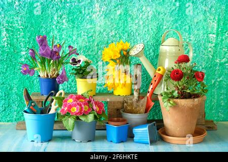 gardening in the springtime, young flowers and garden tools,gardening mock up, good copy space