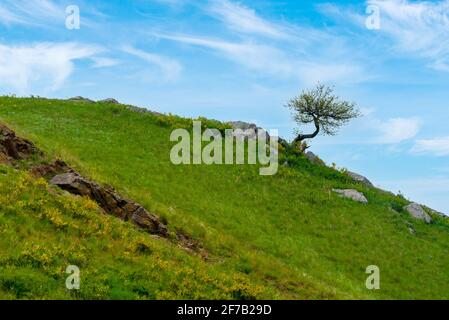 Lonely tree on the slope of hill or mountain at beautiful landscape. - Stock Photo