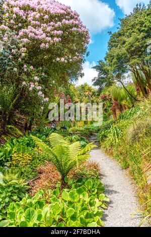 Subtropical Cascade Water Garden at the center of Trebah Garden, Cornwall, England, UK in spring