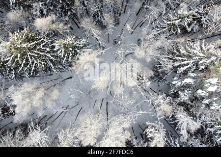 Aerial view of winter nature. Trees covered hoarfrost. Winter forest landscape with snowy trees, top view