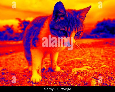 Funny cat in scientific high-tech thermal imager on night background