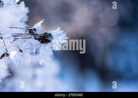 hoar frost on a dry wild flowers