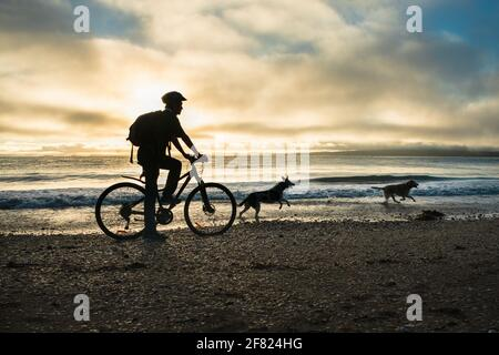 Silhouette image of a cyclist riding along the Milford beach with Rangitoto Island in the clouds and two dogs playing on the beach