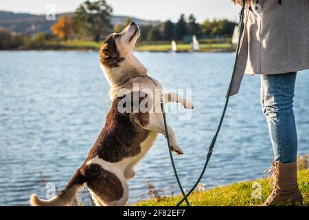 Woman and playful cute mixed breed dog jumping. Pet owner with her curious happy dog playing outdoors