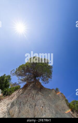 Lonely tree on a cliff under the rays of the sun - Stock Photo
