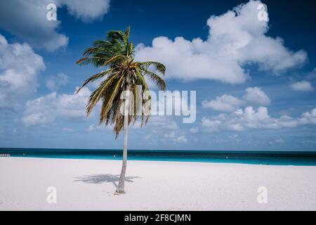 Eagle Beach Aruba, Palm Trees on the shoreline of Eagle Beach in Aruba white beach and blue ocean