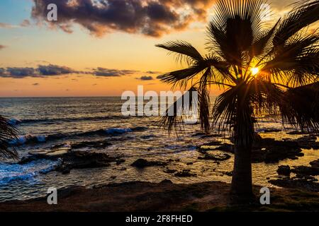 Palm tree on a background of tropical sunset.