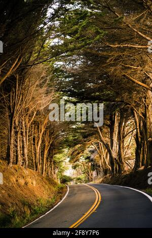 Trees and road, Fort Bragg, California, USA