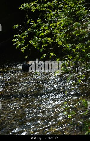 Sun filtering through natural fresh river water with natural sun diamonds in a park aquatic garden with fresh green leaves High Resolution Stock Photo - Stock Photo