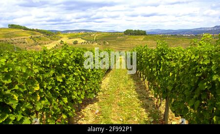 The vineyards at Douro valley in Portugal - great landscape - travel photography