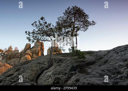 Germany, Saxony-Anhalt, Timmenrode, the first rays of sun of the day hit the Hamburg coat of arms. The sandstone formation belongs to the Teufelsmauer in the Harz Mountains.