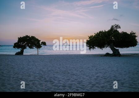 Sunset at Eagle Beach Aruba, Divi Dive Trees on the shoreline of Eagle Beach in Aruba.