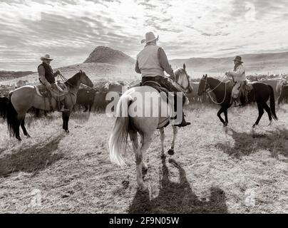 WY04135-00-BW...WYOMING - Cowboys and Cowgirl at a cattle round  up on the Willow Creek Ranch.