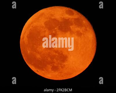 Minster on Sea, Kent, UK. 27th April, 2021. UK Weather: the pink full super moon rising over the cliffs in Minster on Sea, Kent a spectacular orange colour.  Credit: James Bell/Alamy Live News