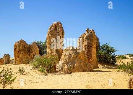 The Pinnacles, Nambung National Park. Limestone formations with blue sky and yellow earth