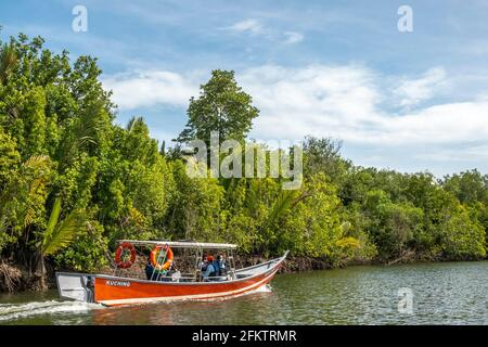 Cruising along Sibu Laut-Telaga Air river bank, Matang, Sarawak, Malaysia