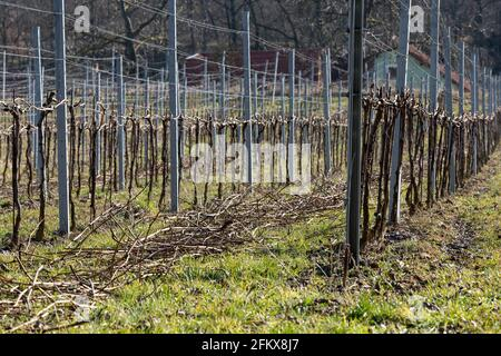 Weingarten After The Pruning
