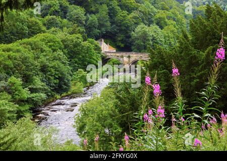 Green Bridge and River Swale surrounded by lush trees with bright pink rosebay willowherb in the foreground, Richmond, North Yorkshire, England, UK - Stock Photo