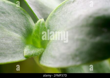 Sunflower sprouts macro photography. Food for vegetarians. Healthy food concept