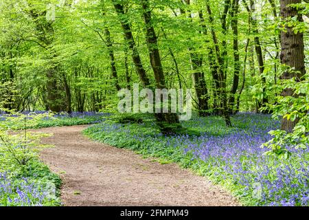 A pathway through a bluebell wood with an abundance of flowers growing