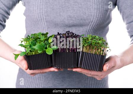 A woman in a gray T-shirt holds micro greens of radish and sunflower on a white background. Microgreen delivery, healthy organic food.