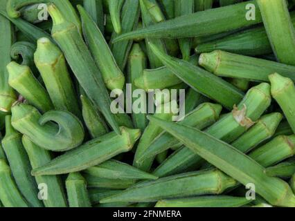 Okra or Okro, Abelmoschus esculentus, known in many English-speaking countries as ladies' fingers or ochro