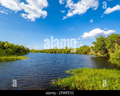 Sunny day with blue sky and white clouds in Deer Prairie Creek Preserve in Venice Florida USA