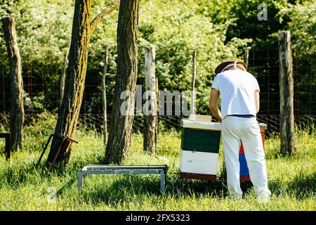 Back look on a beekeeper working with bees colony in the green forest surrounding. Minimal, simple life on a sunny day.
