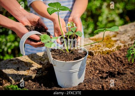 Mother with daughter putting soil in pot while planting strawberry plant in garden